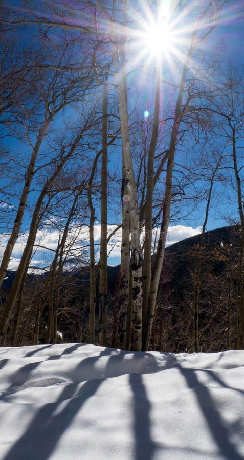 Jour d'hiver ensoleillé avec Aspen Trees images libres de droits