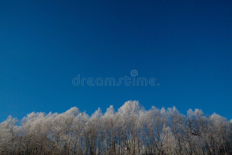 Jour d'hiver givré images stock