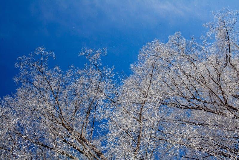 Jour d'hiver givré photos libres de droits