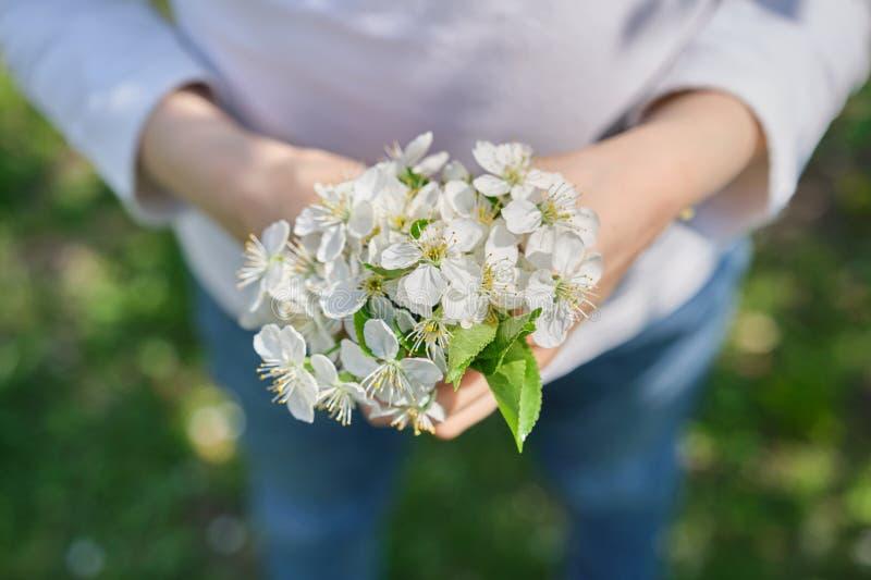 Jour de mères heureux, fleurs de cerisier blanches dans des mains de la fille d'enfant, en gros plan, extérieure photo libre de droits