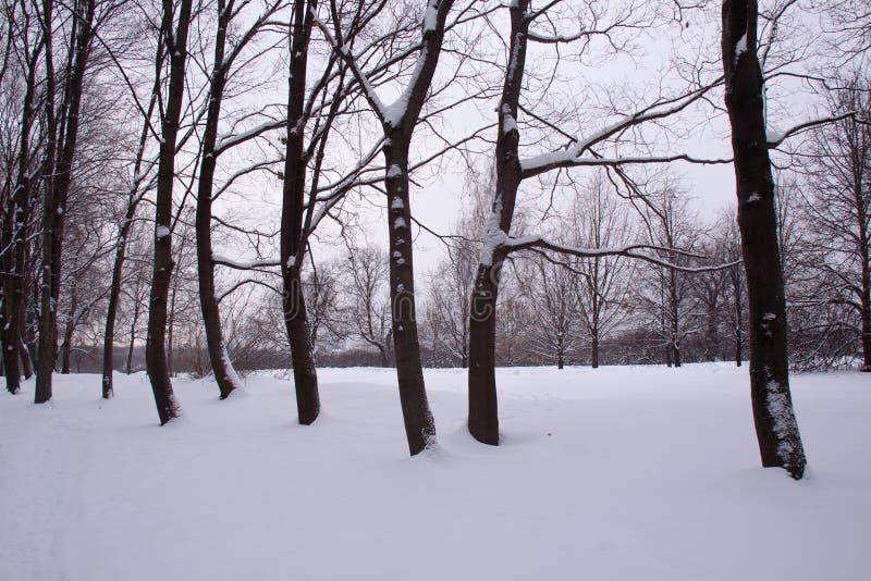 Jour de neige d'hiver de Moscou Russie en parc de ville photographie stock libre de droits