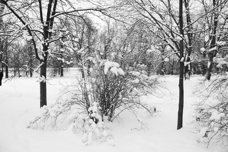 Jour de neige d'hiver de Moscou Russie en parc de ville photo stock