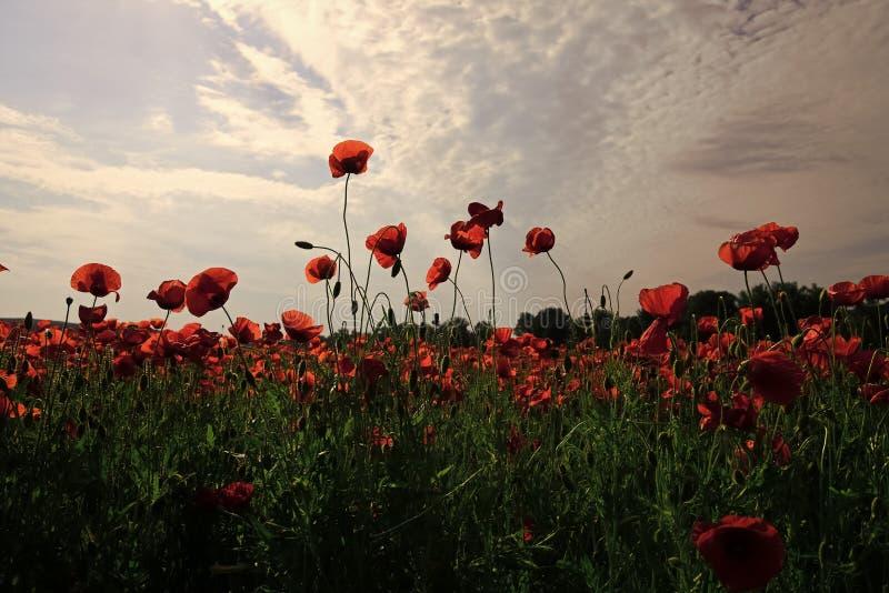 Jour de souvenir, Anzac Day, sérénité image stock