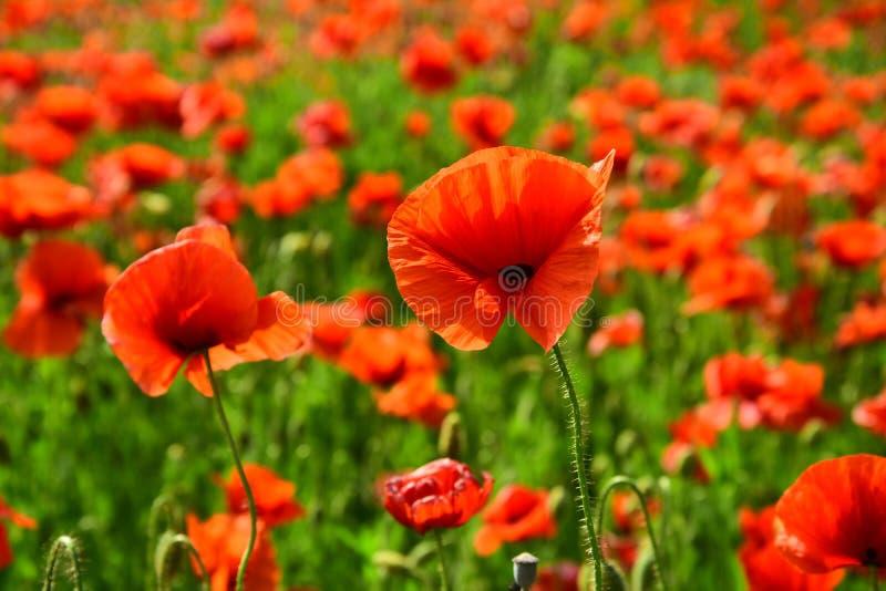 Jour de souvenir, Anzac Day, sérénité photo stock
