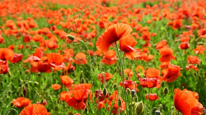 Jour de souvenir, Anzac Day, sérénité images stock