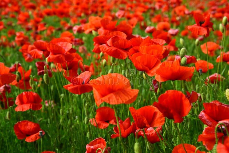 Jour de souvenir, Anzac Day, s?r?nit? images stock