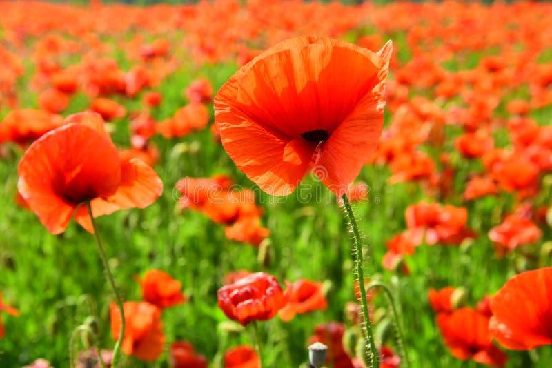 Jour de souvenir, Anzac Day, s?r?nit? photo libre de droits