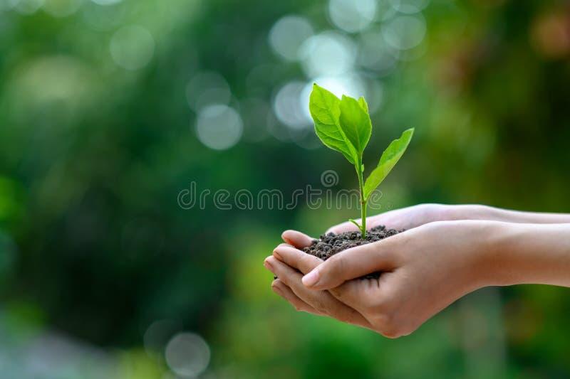 Jour de terre d'environnement dans les mains des arbres cultivant des jeunes plantes Arbre femelle de participation de main de fo image libre de droits