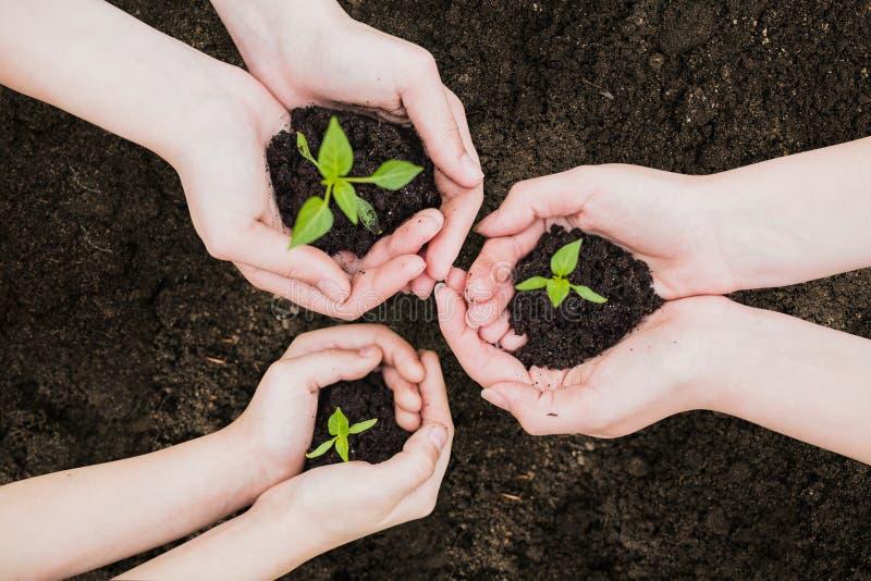 Jour de terre d'environnement dans les mains des arbres cultivant des jeunes plantes Bokeh verdissent la main femelle de fond ten photos libres de droits