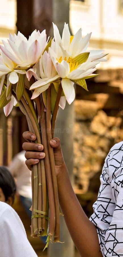 Jour de Visakha Bucha La m?ditation de fleur de lotus de l'anniversaire de Bouddha d?tendent le jour de Vesak de concept images libres de droits