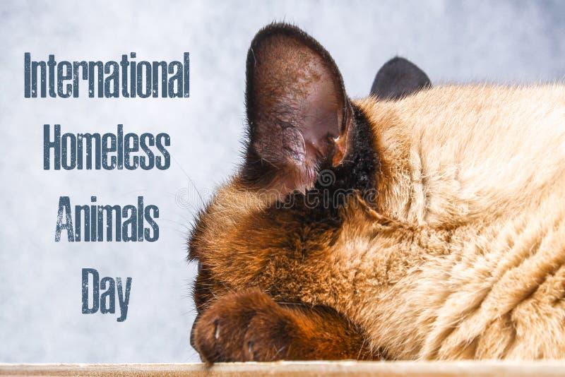 Jour du monde des animaux égarés 18 August International Homeless Animals Day images libres de droits