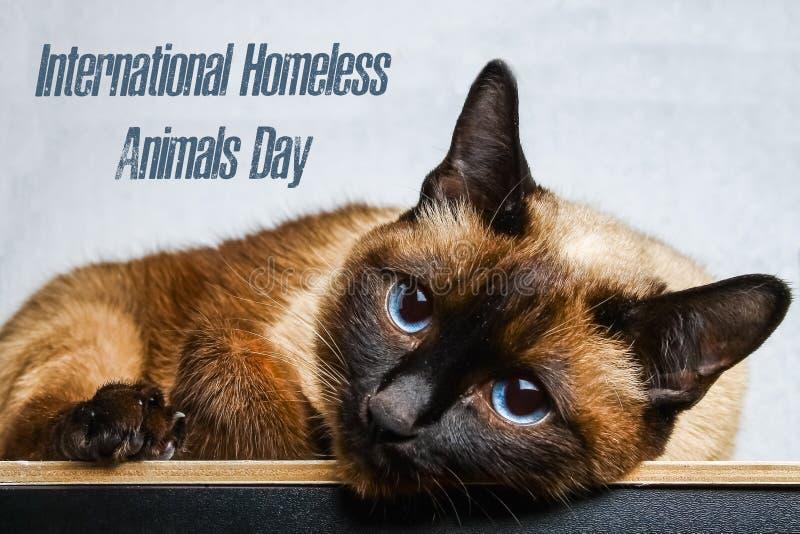 Jour du monde des animaux égarés 18 August International Homeless Animals Day photos stock