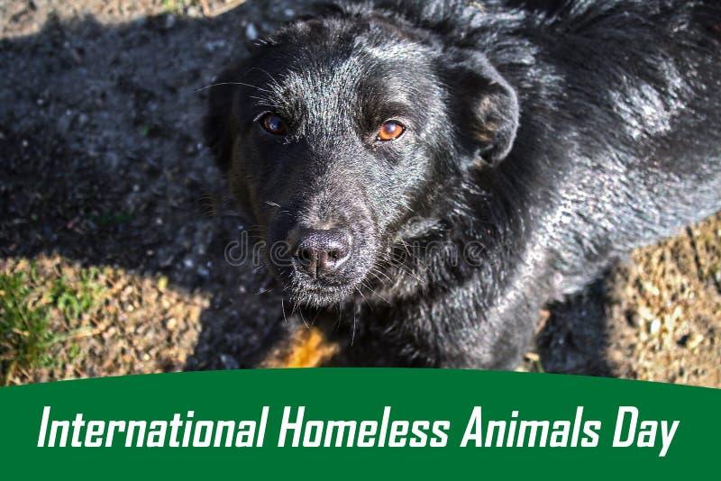 Jour du monde des animaux égarés 18 August International Homeless Animals Day image stock