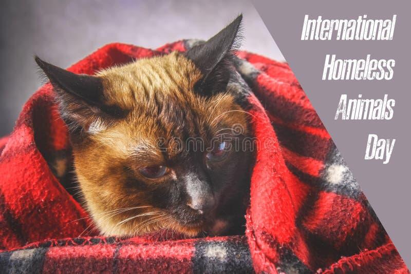 Jour du monde des animaux égarés 18 August International Homeless Animals Day photographie stock