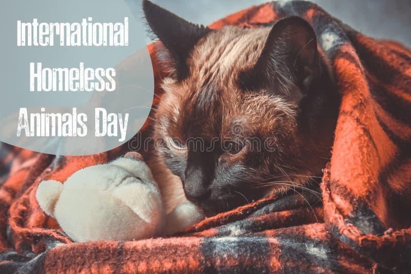 Jour du monde des animaux égarés 18 August International Homeless Animals Day photographie stock libre de droits