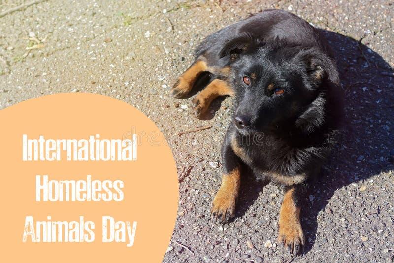 Jour du monde des animaux égarés 18 August International Homeless Animals Day image libre de droits