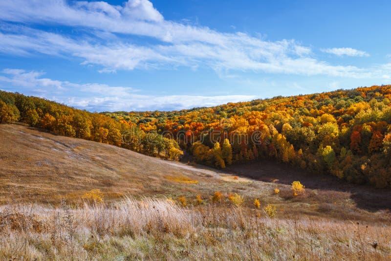 Jour ensoleillé chaud d'automne, collines et forêt d'or photographie stock libre de droits