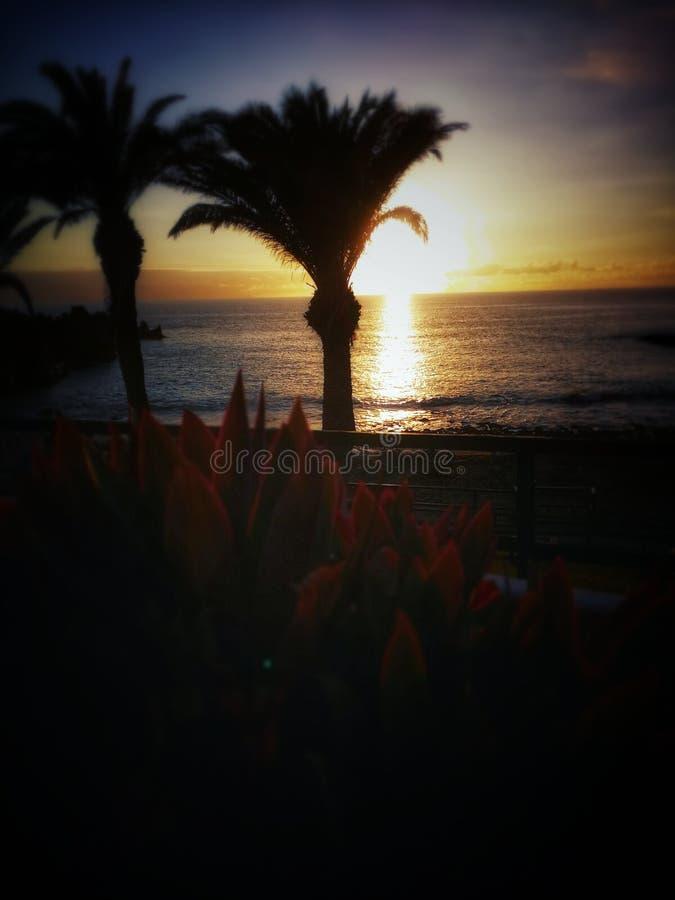 Jour ensoleillé, coucher du soleil, paumes, plage, beauté de tenerifes images libres de droits