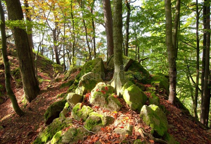 Jour ensoleillé d'automne dans la forêt carpathienne de montagne photo stock
