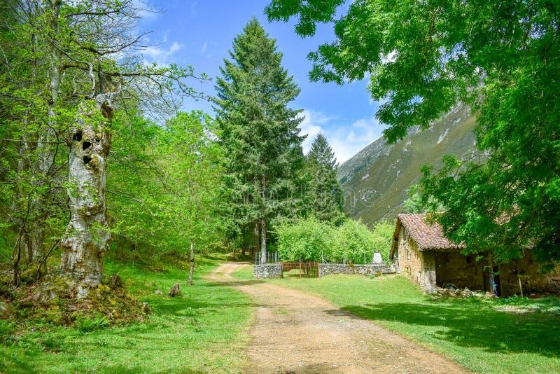 Jour ensoleillé dans Forest Mountain Landscape dans l'itinéraire de trekking de soins, les Asturies photos stock