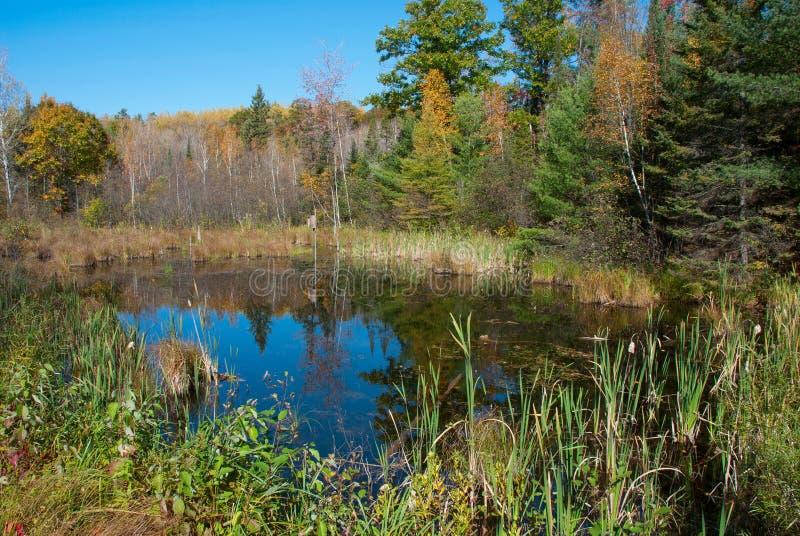 Jour ensoleillé dans la forêt d'automne, le Wisconsin, Etats-Unis photos stock