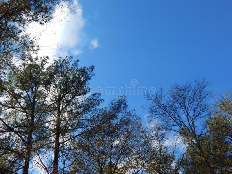 Jour ensoleillé dans les bois photo libre de droits