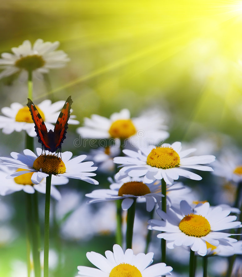 Jour ensoleillé de belle scène de jardin photos stock