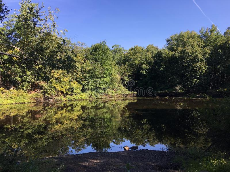 Jour ensoleillé de parc d'étang photos libres de droits