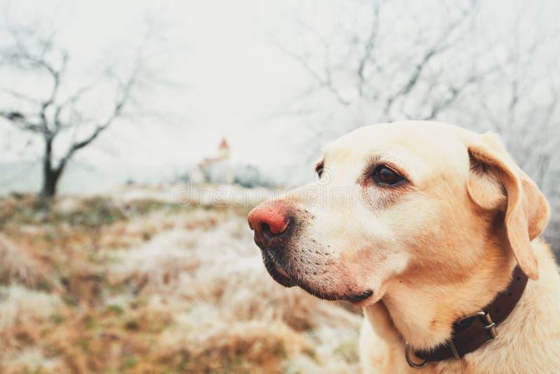 Jour givré avec le chien photographie stock libre de droits