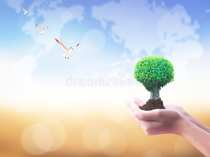 Jour international de concept de coopératives : Tenir le grand arbre dans des mains photos stock