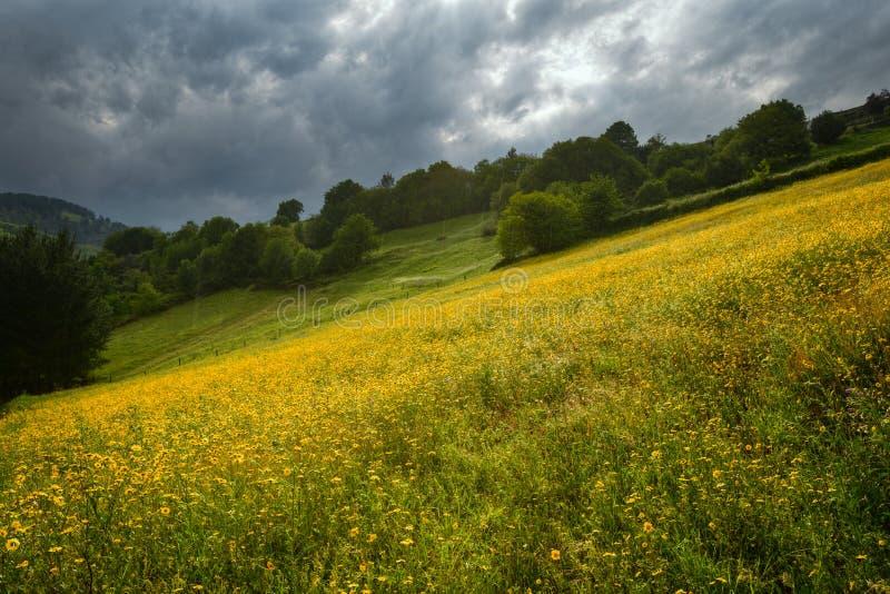 Jour nuageux et pluvieux au-dessus des prés couverts de fleur photographie stock libre de droits