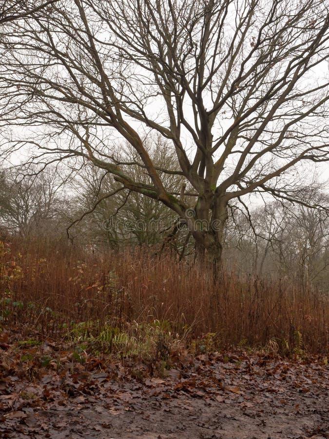 jour obscurci foncé d'automne de branche d'herbe nue d'arbre déprimé images libres de droits