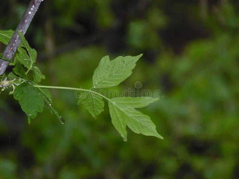 Jour pluvieux 1 photographie stock libre de droits