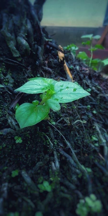 Jour pluvieux de matin du Kerala photo libre de droits