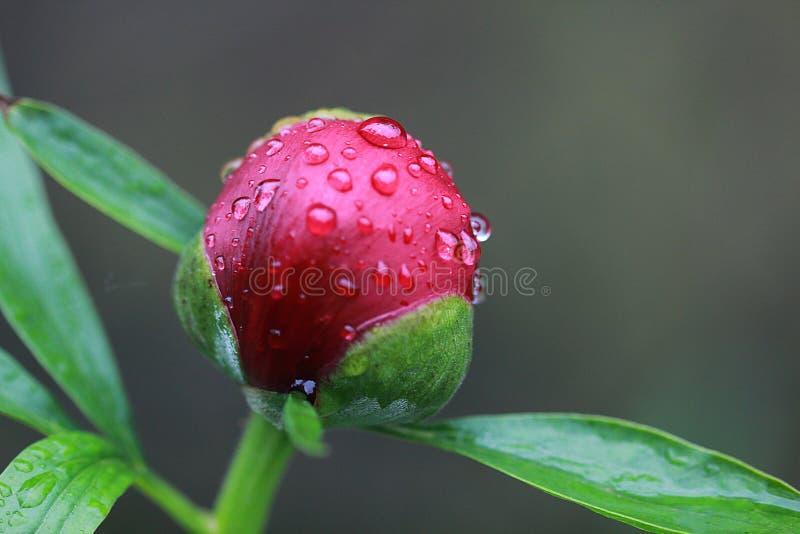 Jour pluvieux sur le jardin photographie stock