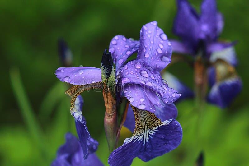 Jour pluvieux sur le jardin image stock