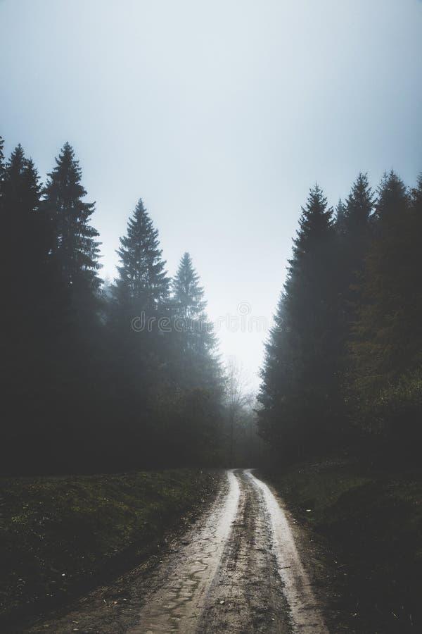 Jour sombre foncé sur le chemin de terre brumeux de forêt photo stock