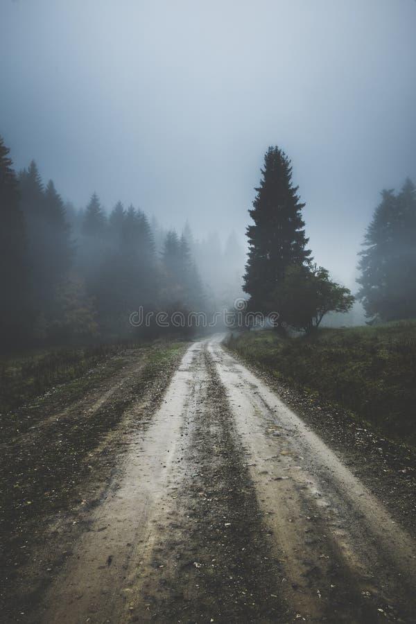 Jour sombre foncé sur le chemin de terre brumeux de forêt photos libres de droits