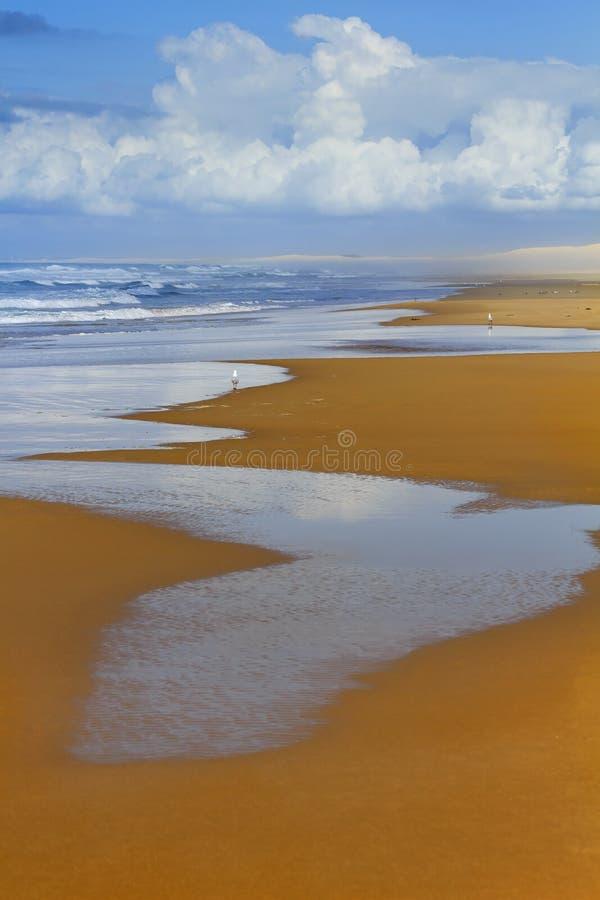 Jour Vert de sable de Stockton de mer photos stock
