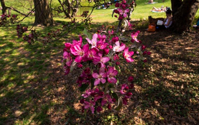 Journée de printemps de détente en parc images libres de droits