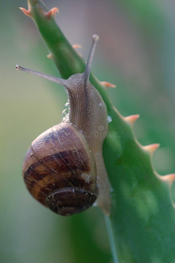 Journal d'escargot images libres de droits