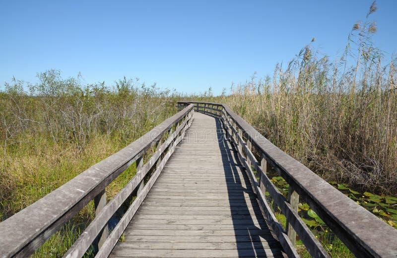 Journal d'observation dans les marais photos stock