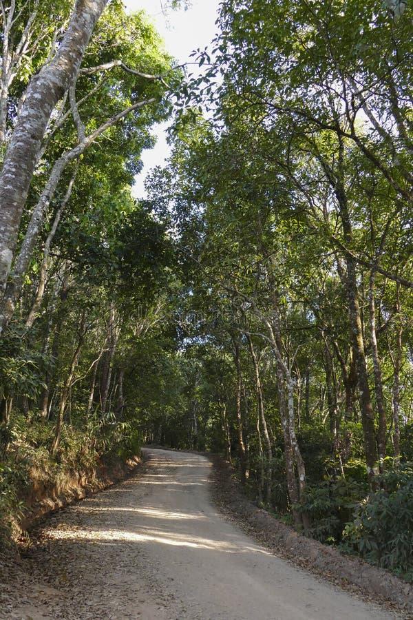 Journal dans la forêt image libre de droits