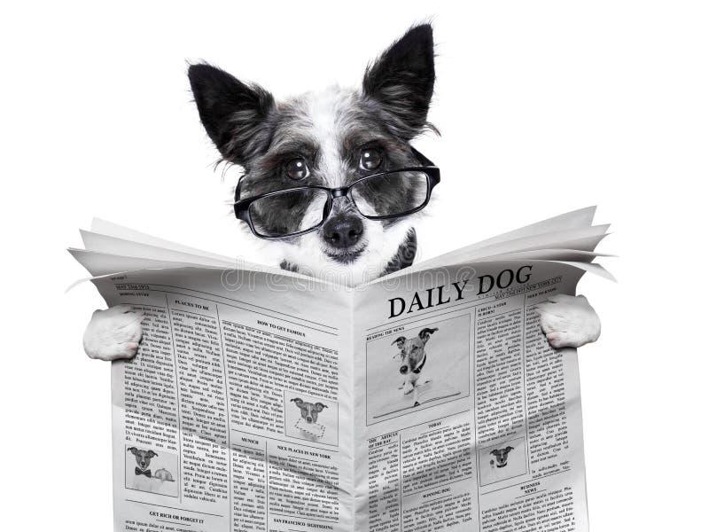 Journal de chien images stock