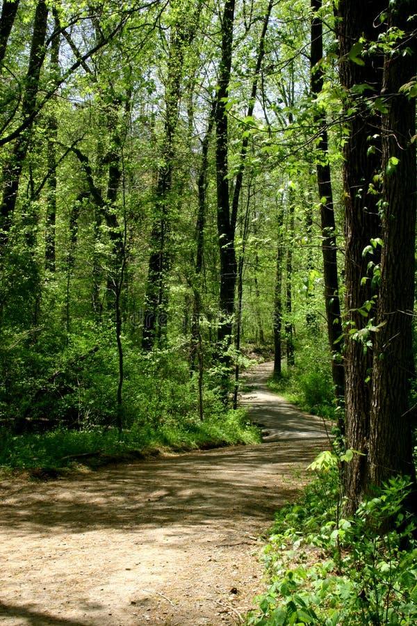 Journal de forêt au printemps image libre de droits