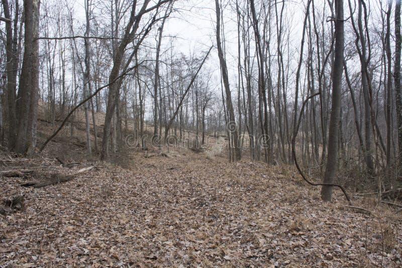 Journal de hausse dans la forêt photographie stock libre de droits