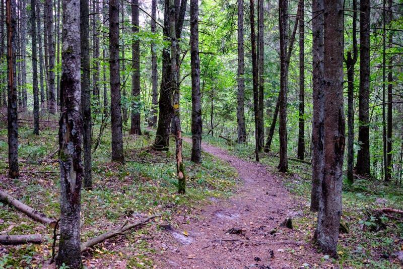 Journal de hausse dans les bois photos stock