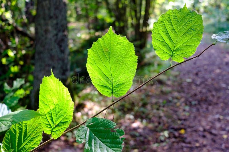 Journal de hausse dans les bois photographie stock libre de droits