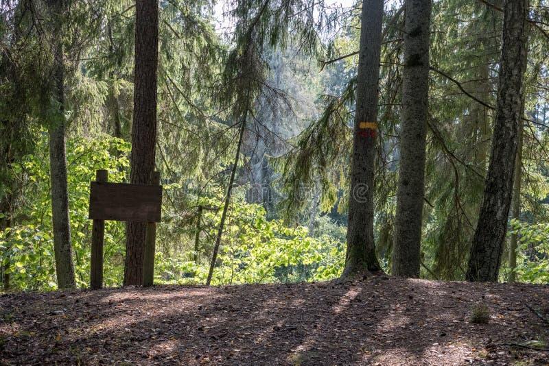 Journal de hausse dans les bois photo stock