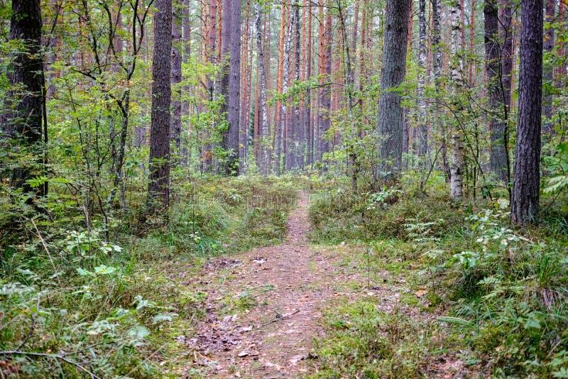 Journal de hausse dans les bois image stock